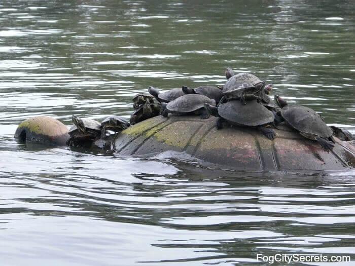 Turtles resting on turtle sculpture in Spreckels Lake