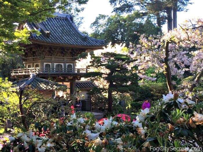Springtime flowers and entrance gate at the Japanese Tea Garden in Golden Gate Park
