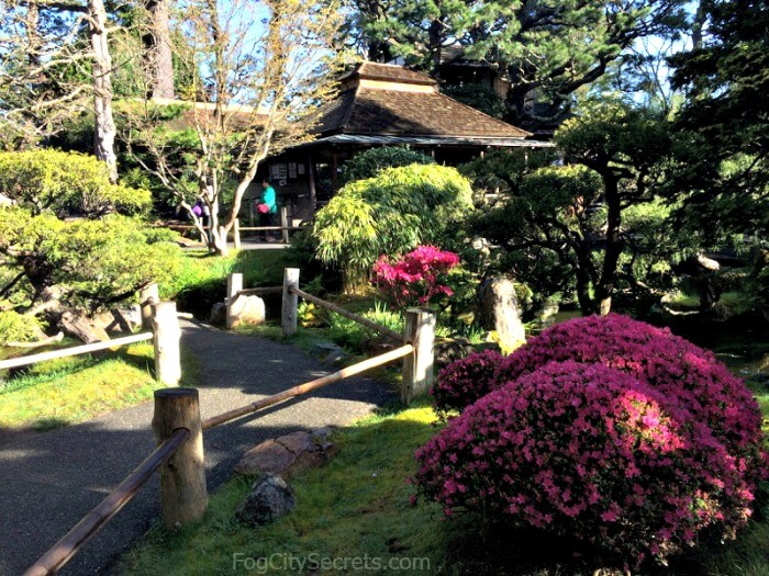 Pink flowering bushes and Tea House at the Japanese Tea Garden in SanFrancisco