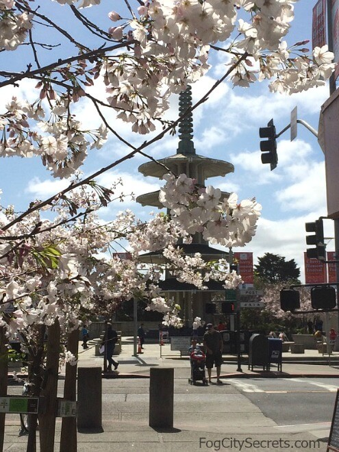 japantown peace plaza pagoda and cherry blossoms