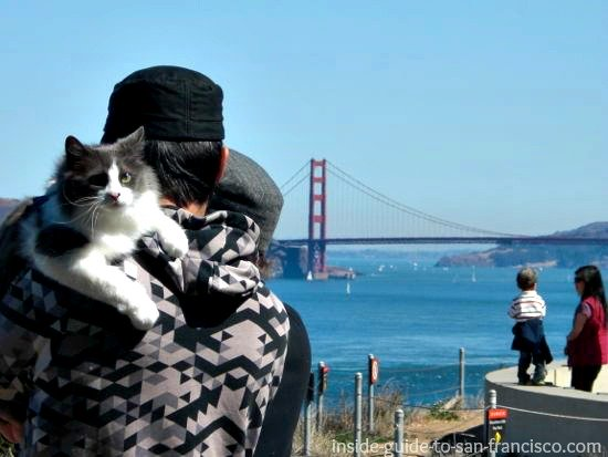 Man holding cat at Lands End San Francisco, view of bridge