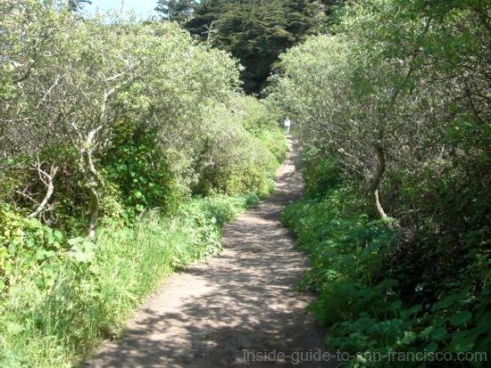 Lands End Coastal Trail, woodsy path