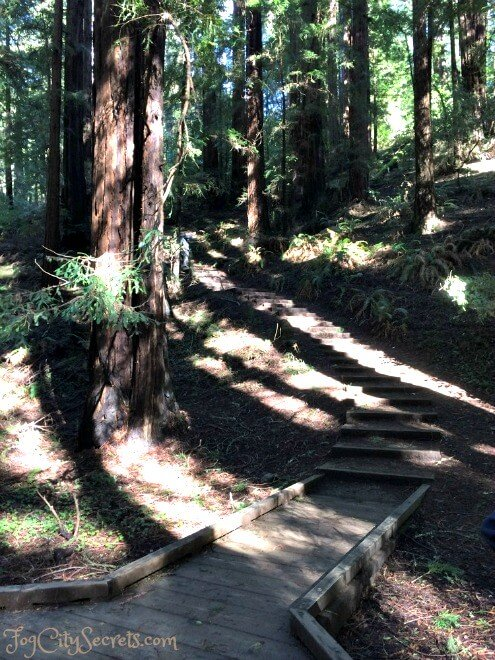 start of canopy view trail in muir woods