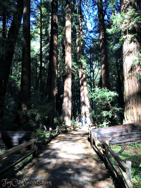 muir woods trail through the redwoods
