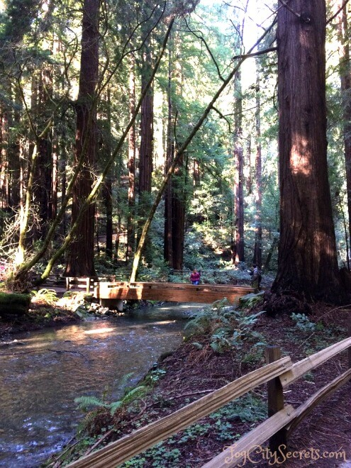 second bridge over redwood creek, muir woods