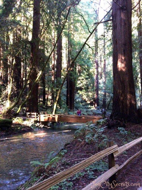 second bridge over redwood creek, muir woods