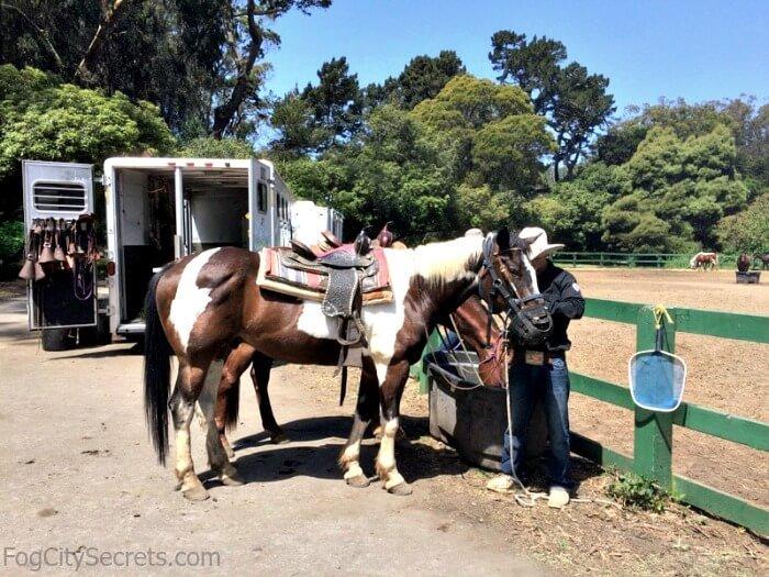 Pinto pony, horseback riding in Golden Gate Park