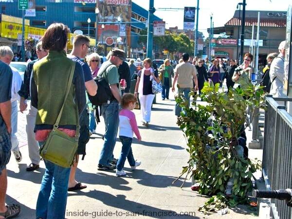 Bush and Bush Man hiding at Fisherman's Wharf SF